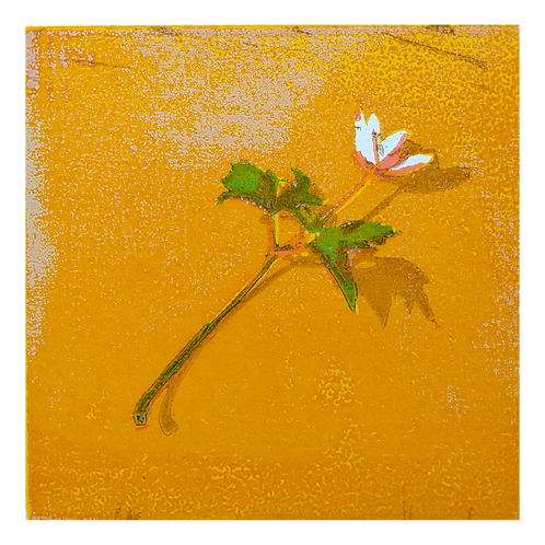 Anemone XXIII - Tor-Arne Moen
