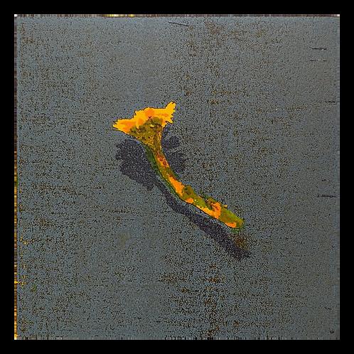 Tussilago II - Tor-Arne Moen