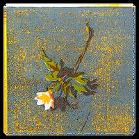 Anemone V - Tor-Arne Moen
