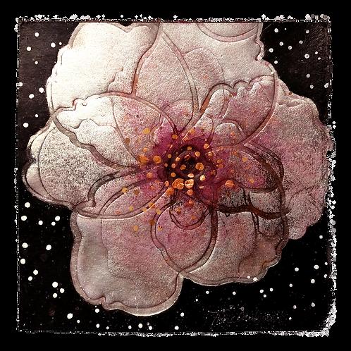 Mellom stjernestøv og blomsterfrø - Trine Lindheim