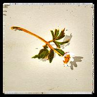 Anemone XI - Tor-Arne Moen