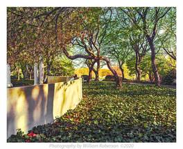 Relax, Brooklyn Botanic Garden