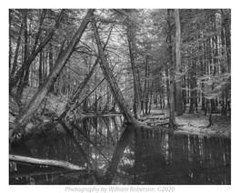 Iroquois Nature Preserve #3
