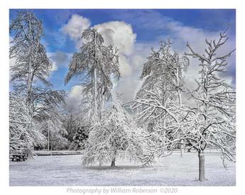 Mist, Frozen Trees, Niagara #2