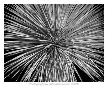 Untitled (Brooklyn Botanic Garden)