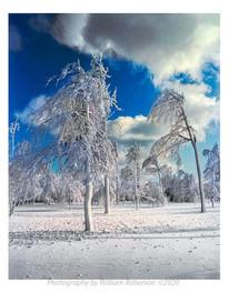 Trees, Frozen Mist, Niagara #2