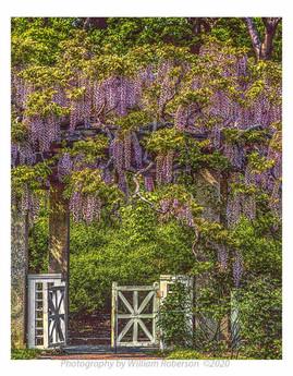 Brooklyn Botanic Garden #3