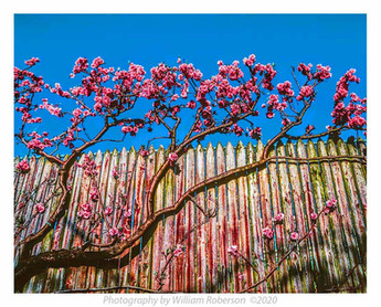 Brooklyn Botanic Garden #4
