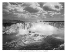 Gull, Niagara Falls