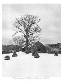 Barn, Tree, Albany County
