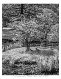 Ducks, Brooklyn Botanic Garden