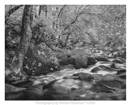 Stream, Blue Ridge #2