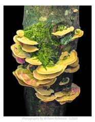 Fungus #2