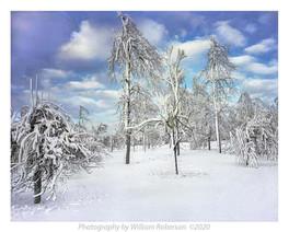 Mist, Frozen Trees Niagara #3