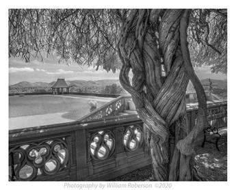 Fist Tree, Biltmore