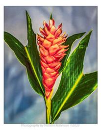 Bromeliad #3