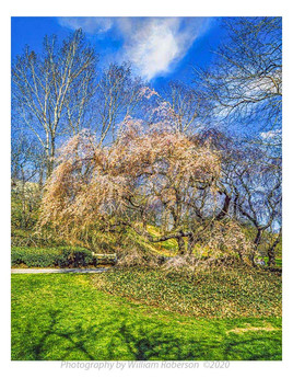 Brooklyn Botanic Garden #5