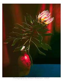 Proteaceae #6