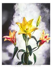 Lilies, Smoke