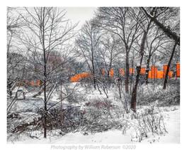 Gates, Central Park #3