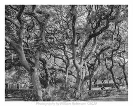 Oaks, Port St. Lucie