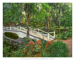 Cypress Gardens #2