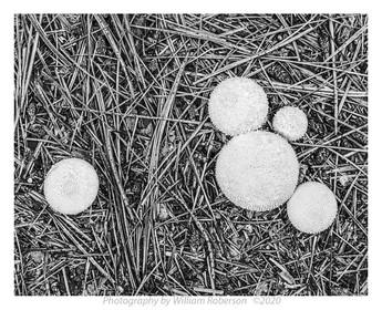 Mushrooms, Pine Needles