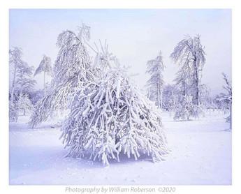 Frozen Trees, Goat Island #3