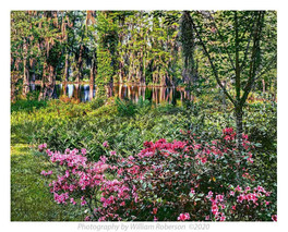 Cypress Gardens #3
