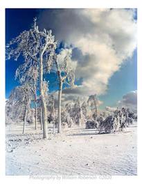 Trees, Frozen Mist, Niagara