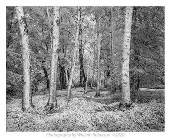 Birches, Creekside Drive