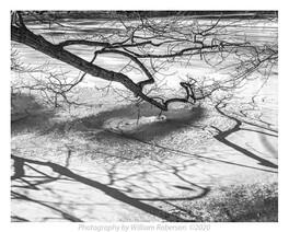 Branch, Shadow, Cayuga Creek