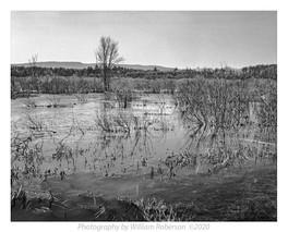 Five Rivers Nature Preserve #2