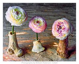 Bone Vases
