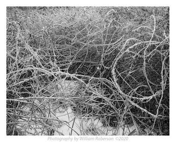 Ice Storm, Jamaica Wildlife Refuge #2