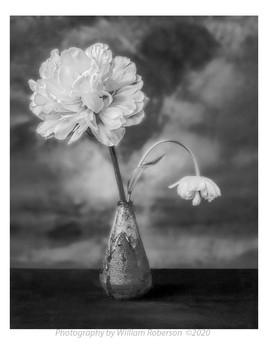 Ranunculus #3