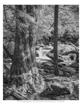 Stream, Blue Ridge #3
