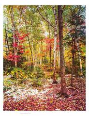 Autumn Snowfall, Adirondacks