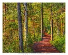 Trail, Paul Smiths VIC