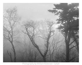 Fog, Blue Ridge Pkwy