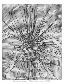 Allium, Mushroom, Reflection