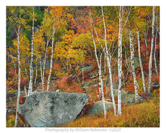 Birches, Cascade