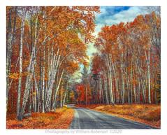 Road to Elk Lake