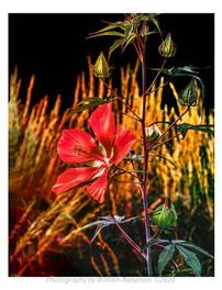 Untitled #3 (Brooklyn Botanic Garden)