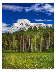 Wildflowers, Mount Robson