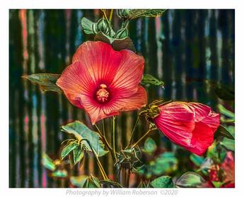 Untitled (Brooklyn Botanic Garden) #2