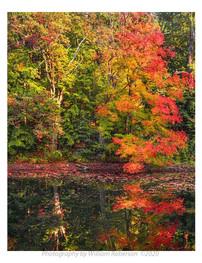 Reflection in Pond, Innisfree