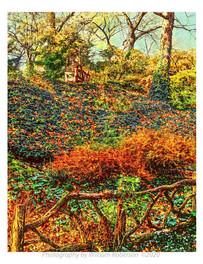 Autumn, Central Park #2
