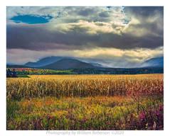 Plains of Abraham #3