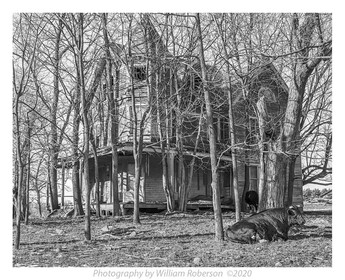 Bull, Decrepit House, Albany County